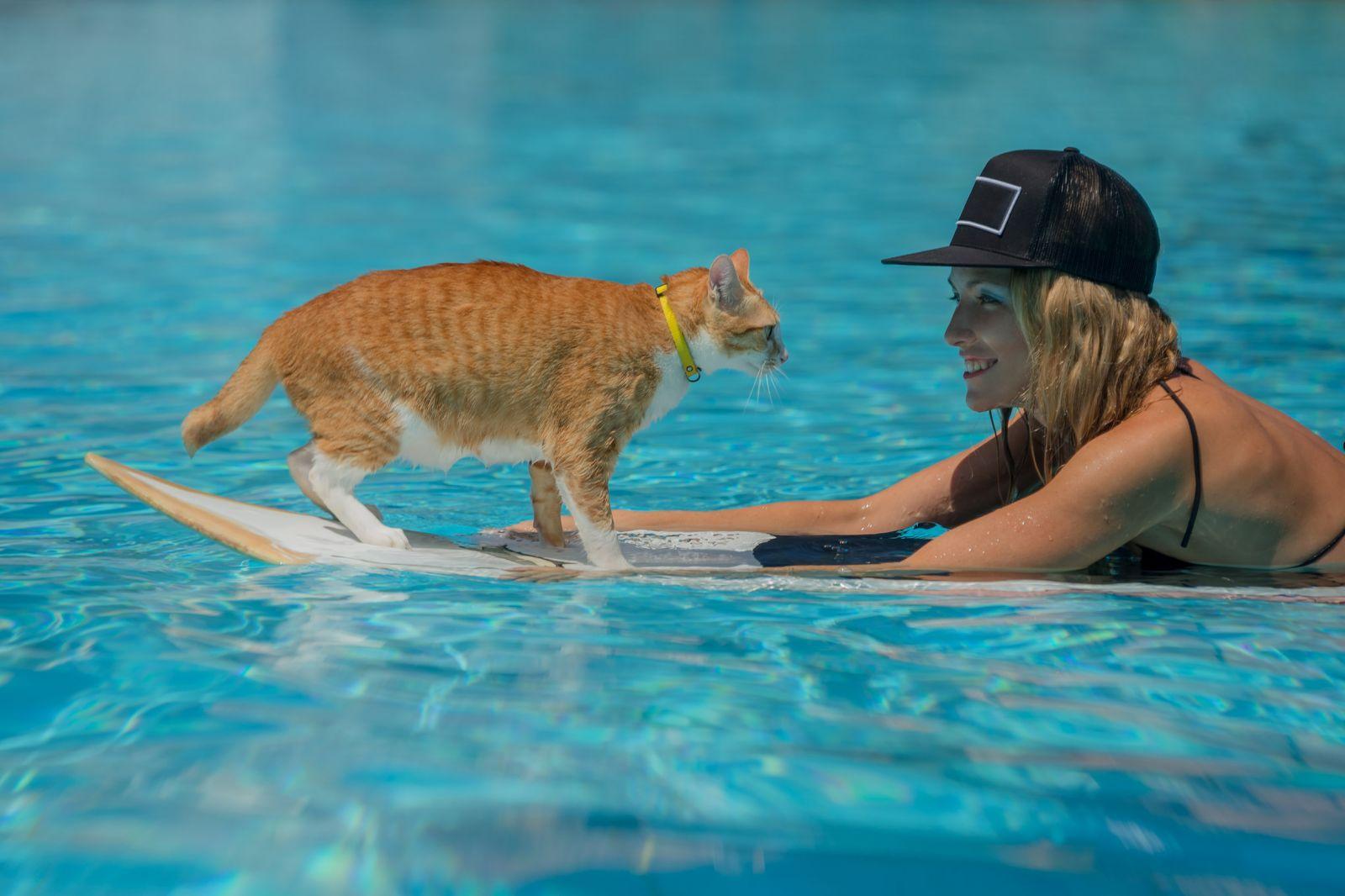Gatos que aman nadar