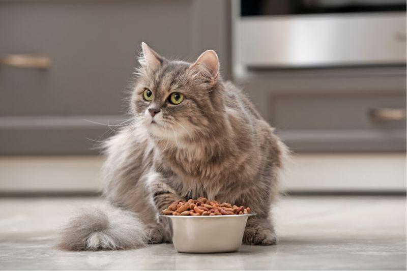 Comida medicada para gatos