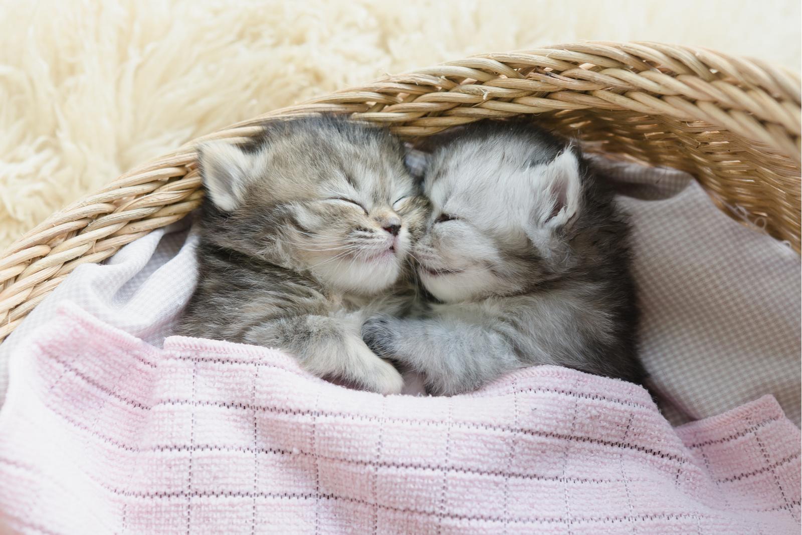 Cómo enseñar a dormir a tu gatito