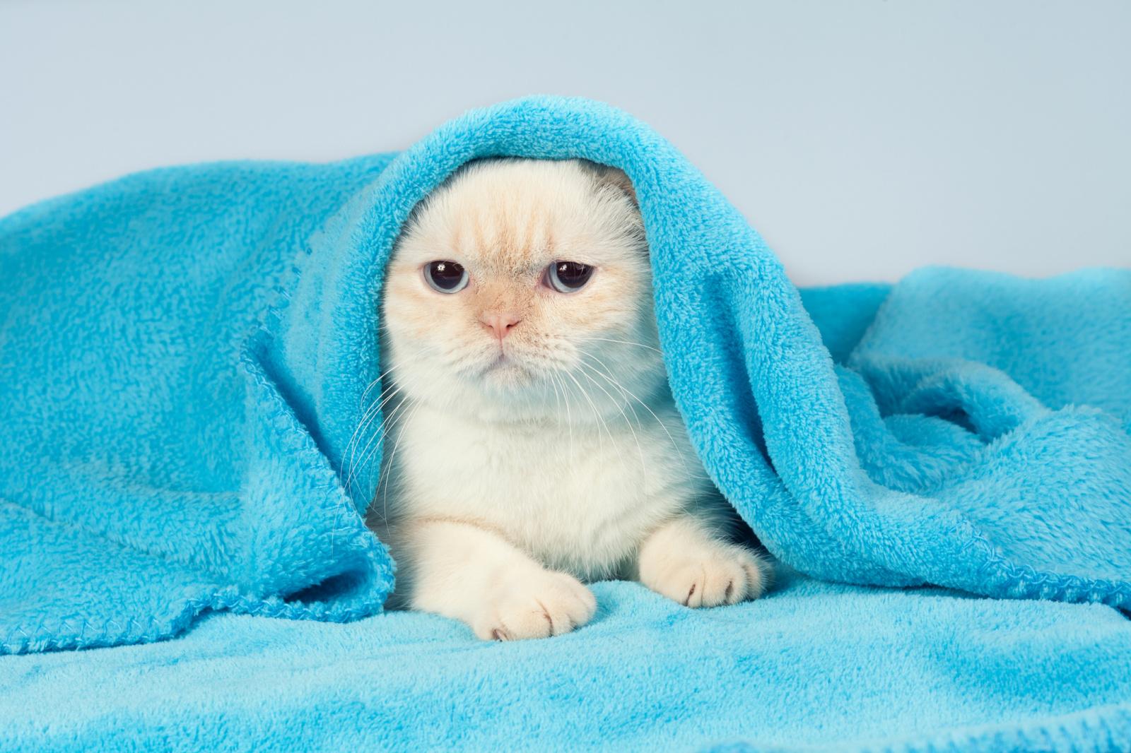 Cuándo abren los ojos los gatitos recién nacidos