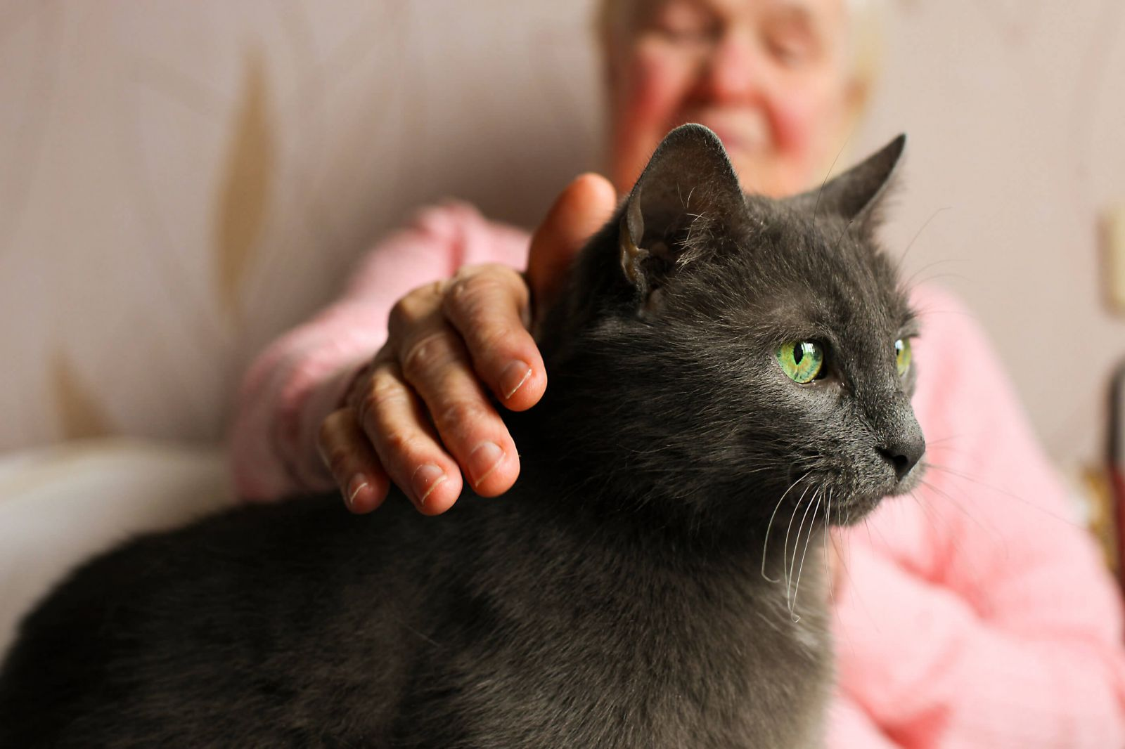 TOP 10 razas de gatos longevos
