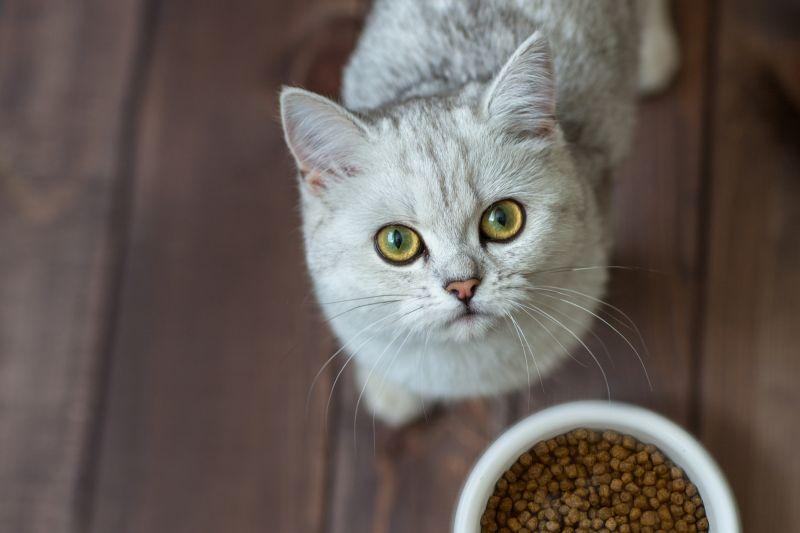 Comida seca para gatos