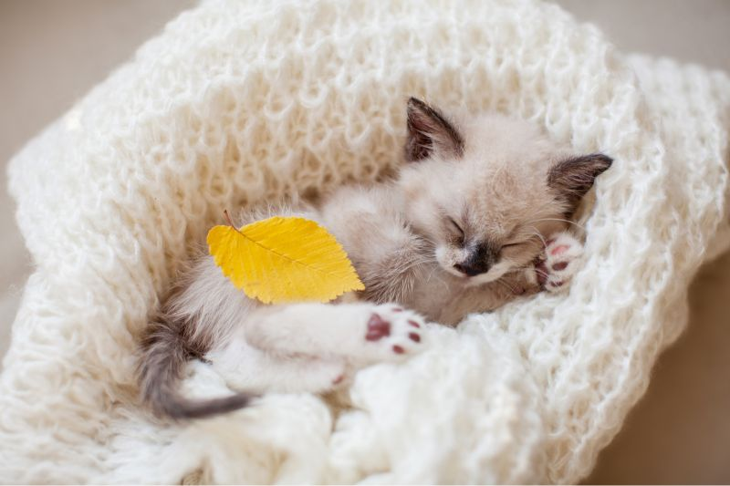 ¿Cómo enseñar a dormir a tu gatito?